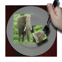 Elephant Bite